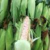 新鲜糯玉米 Waxy corn 1个约400-500g
