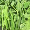 菜园有机豆苗 / 豌豆尖 Pea Spout 约200g