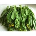 有机种植油菜苔(白菜苔) Pak Choi Sum 约250g
