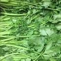 中国细香芹 Fine stem Celery 约400g