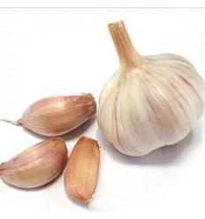 西班牙大蒜 Garlic 约500g