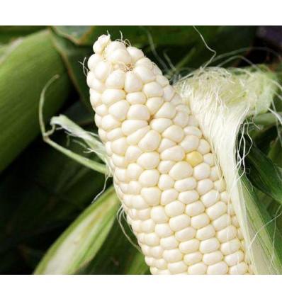 新鲜糯玉米 Waxy corn 1个