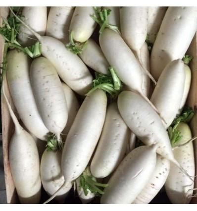 中国白萝卜 Long Radish 约1 - 1.3Kg