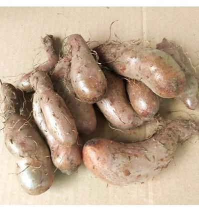 山药蛋 Yam potato 约500g