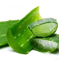 西班牙新鲜芦荟 Aloe vera 300-500g 一根