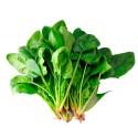 本地菠菜 Spinach 1扎