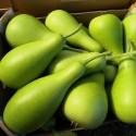有机圆蒲瓜 / 葫芦瓜 Long Po Melon 1 - 1.5 kg