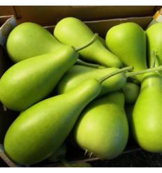 有机圆蒲瓜/葫芦瓜 Long Po Melon 一个约1-1.5Kg