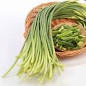 蒜苔 / 蒜芯 Garlic Sprout 2扎