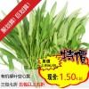 有机柳叶空心菜/通菜 Water Spinach 约300g