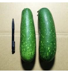 有机种植七星节瓜/毛瓜/小冬瓜 check kwa 1个 1-1.5kg