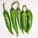有机长尖椒(中辣-)Green Chili 200g