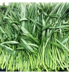 有机竹叶空心菜/通菜 Water Spinach 约300g