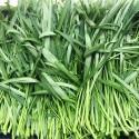 有机柳叶空心菜/通菜 Water Spinach 约250g