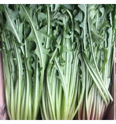 有机新鲜蒲公英 0.7 - 1Kg Mongolian Dandelion Herb