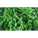 菜园无土栽培迷你豆苗 Mini Pea Sprout 约200g