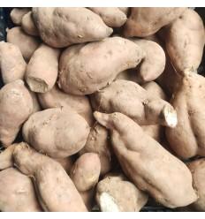 有机 黄皮白心番薯 约0.9-1.1Kg Sweet Potato