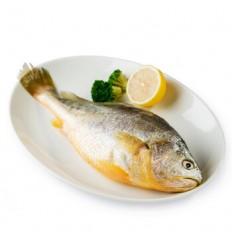 (限寄德法部分地区) EMB单条黄花鱼 400/500g Yellow croaker