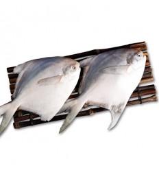 (A区)EMB冻鲳鱼 150/200g(2条装) Pomfret