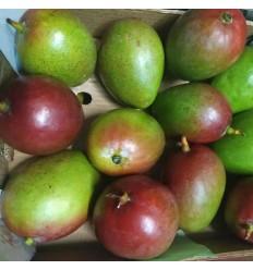 (A+B) 本地芒果 Mango 1个 约250~350g