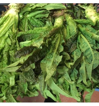 白莴笋 Stem Lettuce 600-800g 一根