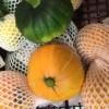 菜园嫩南瓜 Bayby Pumpkin 0.4~0.7kg
