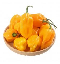 黄灯笼椒 Yellow Chili 200g