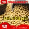 现货!(超大包装20Kg)法国产本地当季黄豆(豆浆,豆芽适用) Soy beans