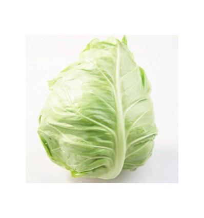 西班牙牛心菜 Spanish Cow Cabbage 每个约500g