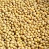 散装黄豆 Soy beans 500g