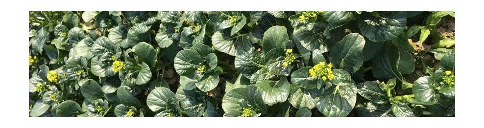 菜园特产蔬果及农产品